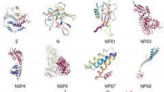 2019新型冠状病毒所有关键蛋白质同源模建结果公布