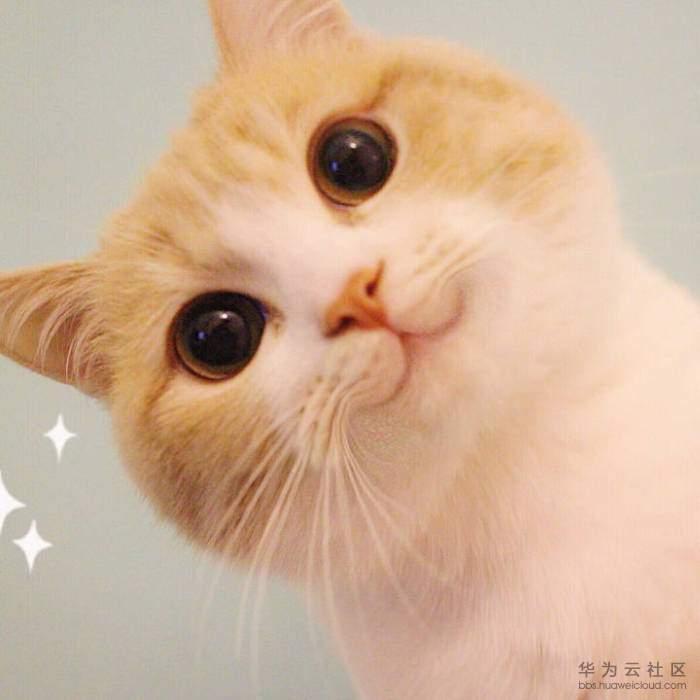 猫.jpeg